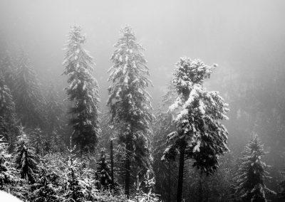 Black Forest Mist